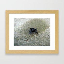 Jumping Spider Framed Art Print