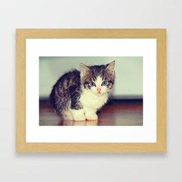 Milo The Kitty Framed Art Print