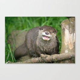 Smiling Otter Canvas Print
