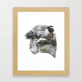 Sykes Monkey! Framed Art Print