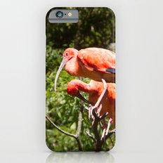 Eudocimus Ruber Slim Case iPhone 6s