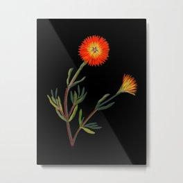 Mesembryanthemum, Aureum Solandri by Mary Delany Paper Collage Floral Flower Botanical Mosaic Vintage Scientific Plant Anatomy Metal Print