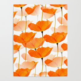 Orange Poppies On A White Background #decor #society6 #buyart Poster