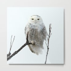 Snowy in the Wind (square) Metal Print