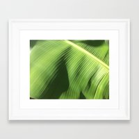 banana leaf Framed Art Prints featuring Banana Leaf by Glenn Designs