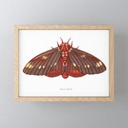 Regal Moth Framed Mini Art Print