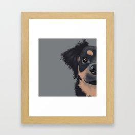 Mila the Carlin Pinscher Framed Art Print