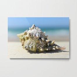 shells by the sea shore Metal Print