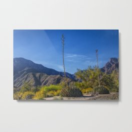 Desert Flowers in the Anza-Borrego Desert State Park, Southern California Metal Print
