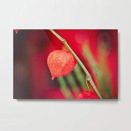Little red flower Metal Print