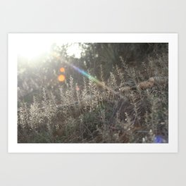 Catching Sunbeams Art Print