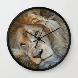 Resting White Lion Wall Clock