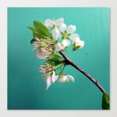 Still Life with Spring Canvas Print
