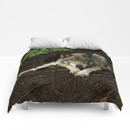 Intense Timber Wolf Comforters