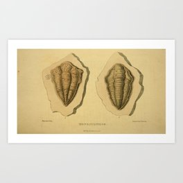 Vintage Print - Arcana or The Museum of Natural History (1811) - Monoculithos Trilobites Art Print