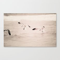 swoop - seagull - beach - florida Canvas Print