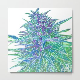 White Hemp harvest our 2019 Medford Oregon lizzie Faye La Jolla number five Metal Print