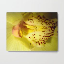 Orchid's Core - Colorful Metal Print