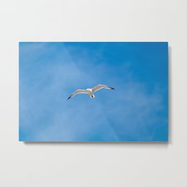 Great Black-backed Gull - blue sky 44 Metal Print