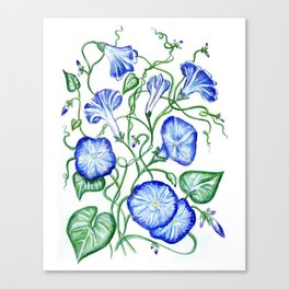 Morning Glory Vine Canvas Print