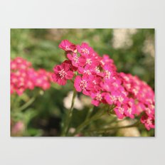 Pretty in Pink. Canvas Print