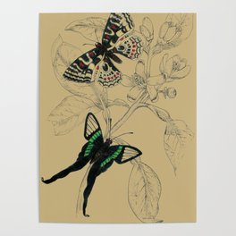 Scientific Colorful Butterflies Poster