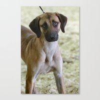 the hound Canvas Prints featuring Hound Pup by IowaShots