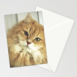Siberian cat. Portrait of Mr. Cesare Stationery Cards