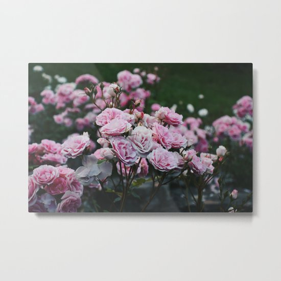 Rose Garden at Dusk Metal Print