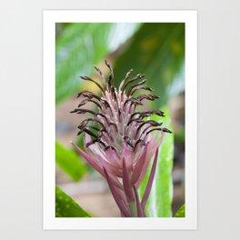 Bromeliad in Pink Art Print