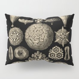 """Hexacoralla"" from ""Art Forms of Nature"" by Ernst Haeckel Pillow Sham"