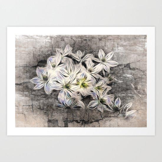 Allium Greys Art Print