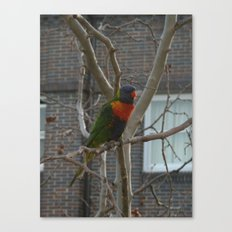Rainbow Lorikeet DPG150612 Canvas Print