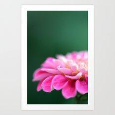 pink macro flower Art Print