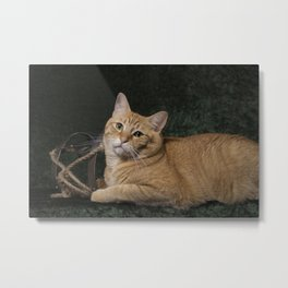 Loki With Sled Metal Print