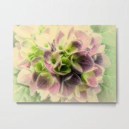 Soft Hydrangea Flower Modern Country Farmhouse Art A422 Metal Print