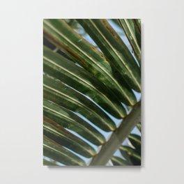 Palms of St. Croix Metal Print