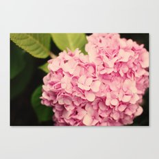 Fragrant  Canvas Print