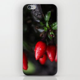 Red Hot Garden Salsa Chili Peppers. iPhone Skin
