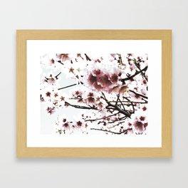 Sakura X Framed Art Print