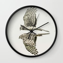 Northern Harrier Pair - with Border Wall Clock