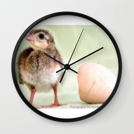 One Day Old Peacock AKA Pip Wall Clock