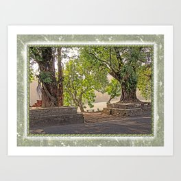 Tropical Hardwood Trees in Pokhara, Phewa Lake, Nepal Art Print