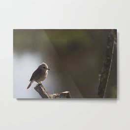 Birds from Pantanal chibum Metal Print