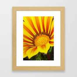 Orange and Rust Color Gazania Montezuma Macro  Framed Art Print