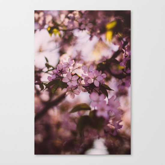 Beauty of Spring III Canvas Print