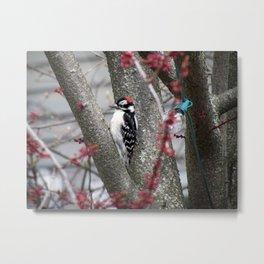 Spring Woodpecker Metal Print