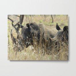 Black Rhino Pair Metal Print