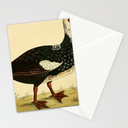Vintage Print - A Natural History of Birds (1730s) - Muscovy Drake Stationery Cards