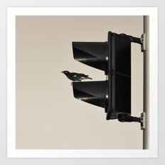 traffic bird Art Print